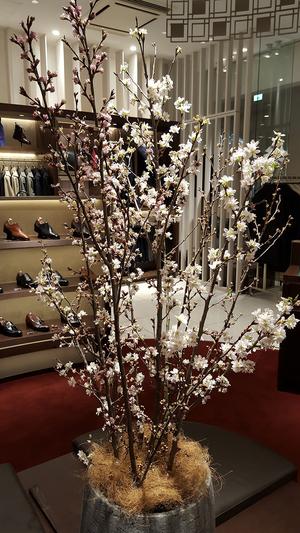 【銀座店】 Spring has come (春が来た)