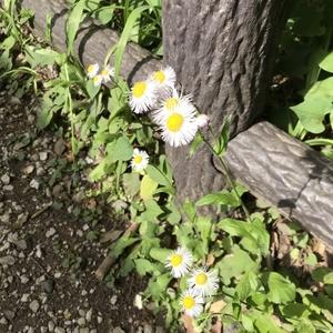【二子玉川店】5/6(木)より営業再開のお知らせ